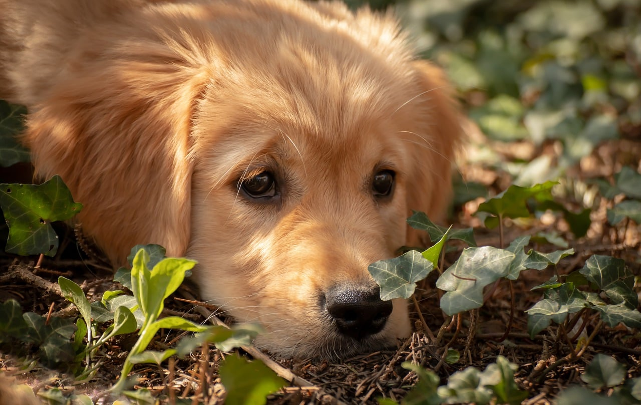 dog, puppy, view